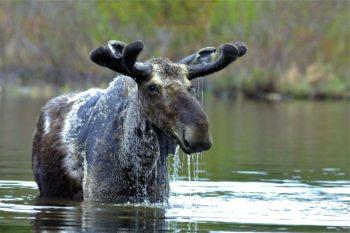 moose7-2x4-8